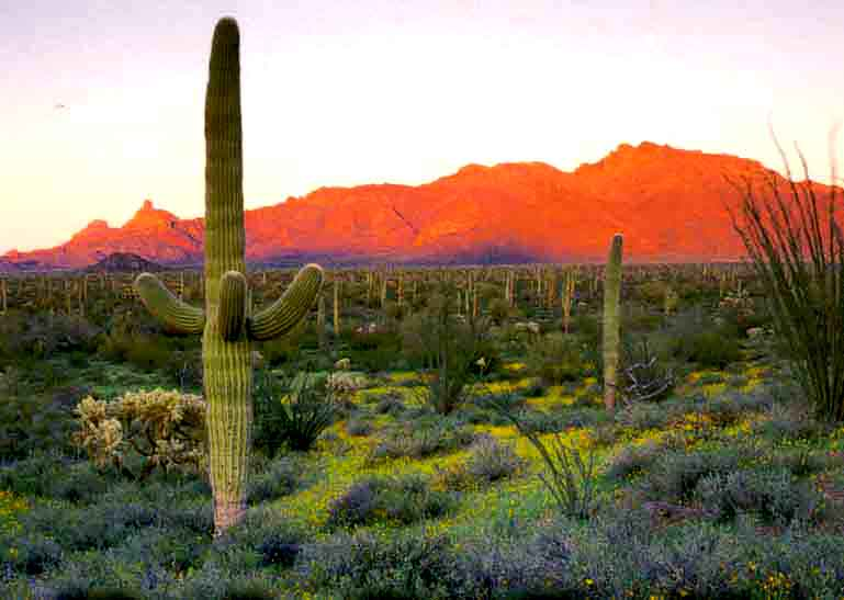 Sonoran Desert Arizona Related Keywords Suggestions
